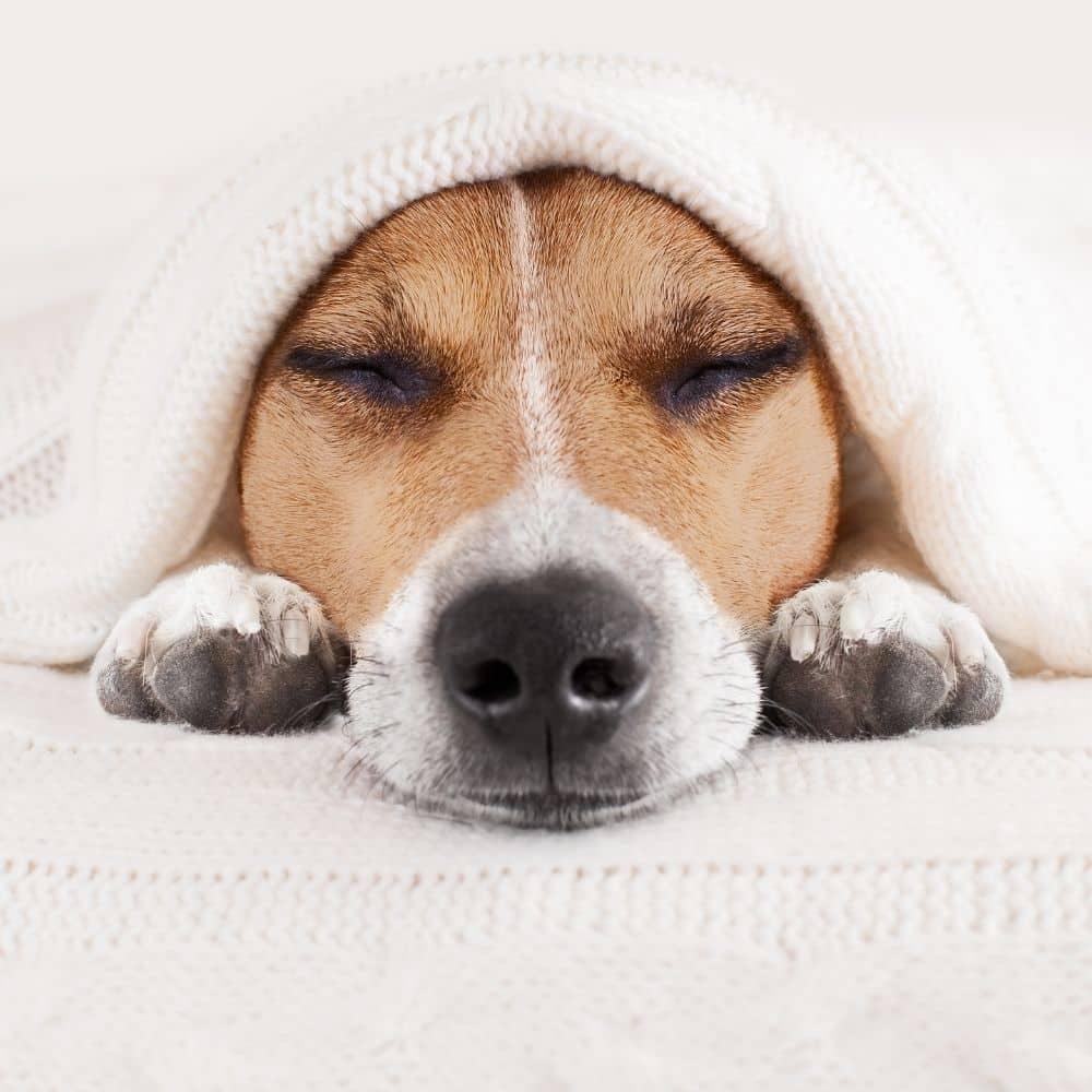 tips winter slaap nachtrust